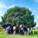 The mango tree, where everything began